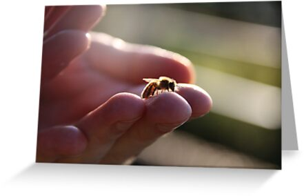 A wasp in the hand by Hege Nolan