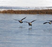 Canadian Geese Takeoff Sticker
