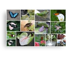 Butterfly and some other reptiles Canvas Print