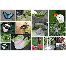 Butterfly and some other reptiles Photographic Print