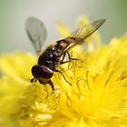 Can a hover fly smile ? by john  Lenagan