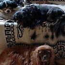Salvador Dali dogs and no room for dear Rowley  by BronReid