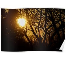 Golden Sunset in the Trees Poster