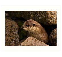 otter emerging from holt Art Print