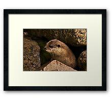 otter emerging from holt Framed Print