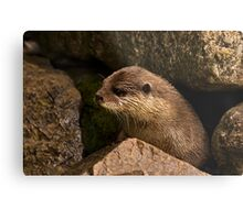 otter emerging from holt Metal Print