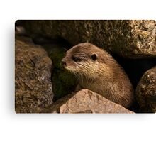 otter emerging from holt Canvas Print