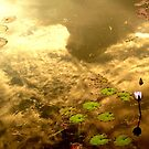 On Golden Pond II by Digby