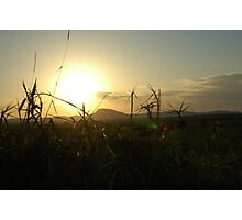 Grasses and distant sun Photographic Print