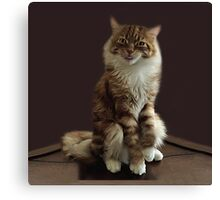 HUMOROUS CAT PICTURE ..WHAT DO U MEAN I HAVE ATTITUDE? -- PILLOWS--TOTE BAGS--ECT. Canvas Print
