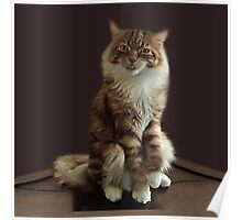 HUMOROUS CAT PICTURE ..WHAT DO U MEAN I HAVE ATTITUDE? -- PILLOWS--TOTE BAGS--ECT. Poster