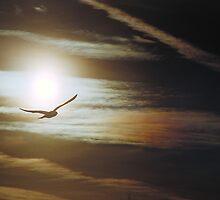 Lake Manawa Seagull by Greg Wolkins