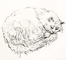 Toastie : ink drawing by Roz McQuillan