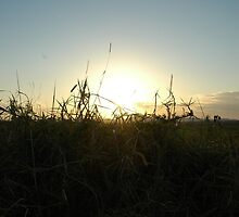 Sunshine, grasses of the north by NaraZ