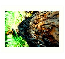 Tree trunk #1 Art Print