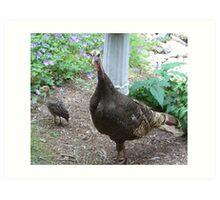 Wild Turkeys - of course Art Print