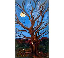 Moon Tree Photographic Print