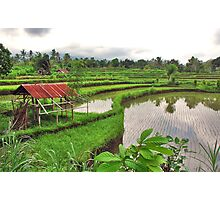 Typical Bali..... Photographic Print