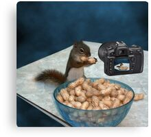 CHIPMUNK ENJOYING HIS PEANUTS,PILLOWS,PICTURE,TOTE BAG ECT.. Canvas Print
