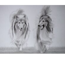Rough Collie Retrievers Photographic Print