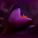 Passionate purple by Yool