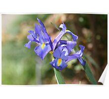 Blue Lili Poster