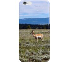 Pronghorn Antelope iPhone Case/Skin