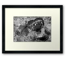 Jaws in Black and White Framed Print