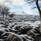 Ingleborough From Southerscales by SteveMG