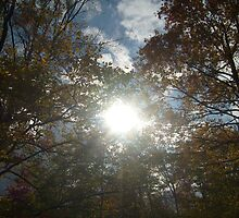 Bursting Sun Rays by pambee68