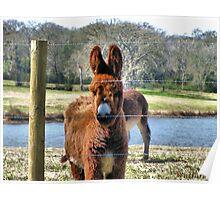 Donkey's Coat Poster