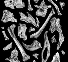 dinosaur skeleton bones by v0ff