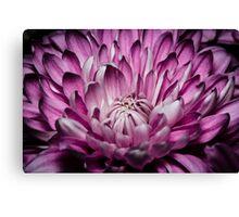 Purple flower macro Canvas Print