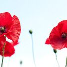 Poppies on White by Sarah-fiona Helme