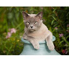 Top Cat ! Photographic Print