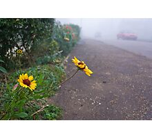 A touch of colour on a misty morning Photographic Print