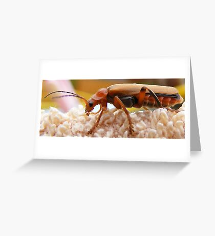 Garden Bug Greeting Card