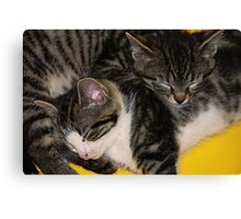 Two kittens asleep Canvas Print