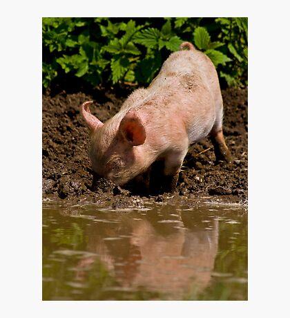 Mud, mud, glorious mud... Photographic Print