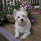 Winnie in the Flowers by reindeerfamily