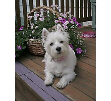 Winnie in the Flowers Photographic Print