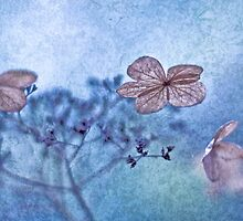 Winter's butterflies by Maria Ismanah Schulze-Vorberg