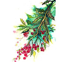 Christmas Holly Photographic Print