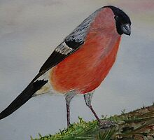Bullfinch by Marilyn Grimble
