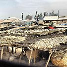 Fish drying in Gambia . by Lilian Marshall