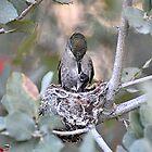 Hummingbirds Tiny Cycle of Life # 2 by Judy Grant