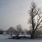 Lonely tree in a snow-covered field by fotdmike