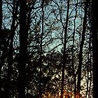 Glow through the trees by DanAlford