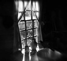 Afternoon Sun by Darcie La Scala