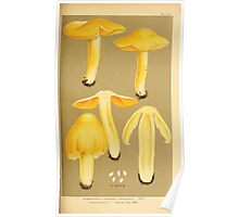 Illustrations of British Fungi by Mordecai Cubitt Cook 1891 V6 0321 HYGROPHORUS  HYGROCYBE  OBRUSSEUS Poster